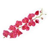 Flor Orquidea Phac de 11 flores