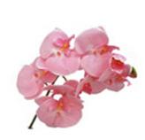 Flor Orquidea Phal de 8 flores