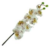 Flor orquídea Marbel