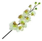 Flor orquídea Mix