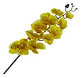 Flor Orquidea Petal