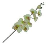 Flor orquídea Grande Mix