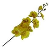 Flor Orquidea Flor Grande Mari