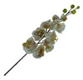 Flor Orquídea Mixt