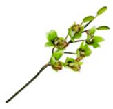 Flor Orquídea Floup
