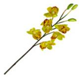 Flor Orquidea Amaris