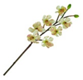 Flor Orquídea Soo