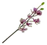 Flor Orquídea Hibri