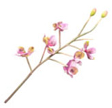 Flor Orquídea Fisni