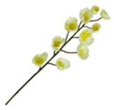 Flor rquídea Gaske