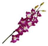 Flor orquídea Lis