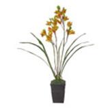 Maceta Orquidea Phalin