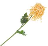 Flor Crisantemo Salmon