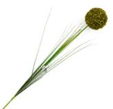 Flor Allium Cepa Verde