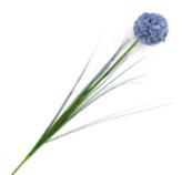 Flor Allium Cepa Lila