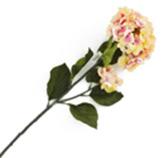 Flor Hortensia Grande Crema