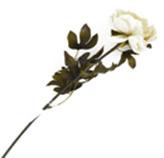 Flor Peonia Pequeña Blanca