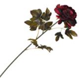 Flor Peonia Pequeña Roja