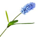 Flor Delphinium Lila