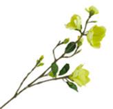 Flor Magnolia Verde
