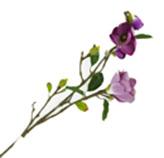 Flor Magnolia Lila