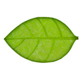 Individual Verde Diseño de Hojas 30x45cm