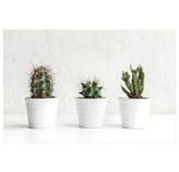 Cuadro Cactus 3 Macetas 40x60cm