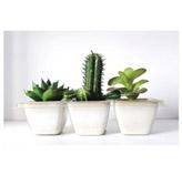 Cuadro Cactus Bromelia 40x60cm
