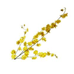 Flor Orquídea Oncid