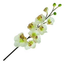 Flor Orquídea Blanca con Verde Mix