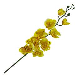 Flor Orquídea Mari