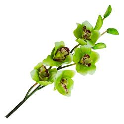 Flor Orquídea Nep