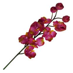 Flor Orquídea Princess