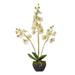 Maceta Orquidea Blan