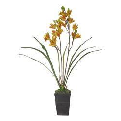 Maceta Orquídea Phalin
