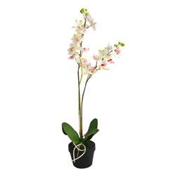 Maceta Orquídea Cupis