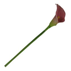 Flor Calla Roja