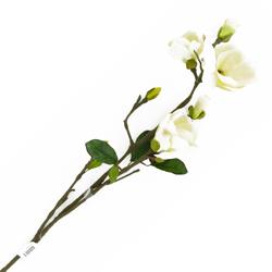 Flor Magnolia Blanca