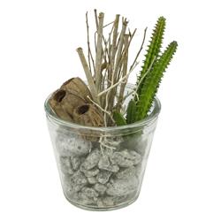 Macetero Cristal con Planta Cactus