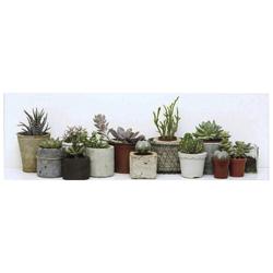 Cuadro Cactus 13 Macetas 30x90cm