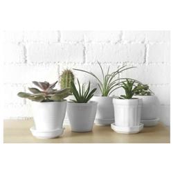 Cuadro Cactus Plantas 40x60cm