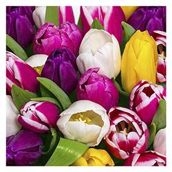 Servilleta Tulips 33x33cm 20 Unidades