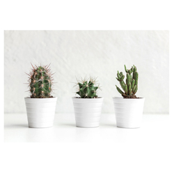 Cuadro Cactus 3 Macetas 60x40cm